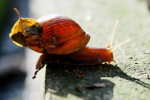 snail  small  shell