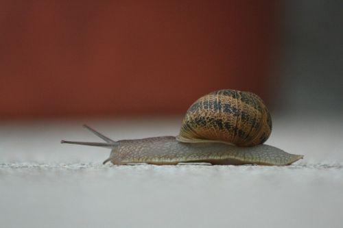 snail slow nature