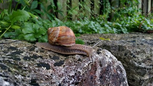 snail  stone  reptile