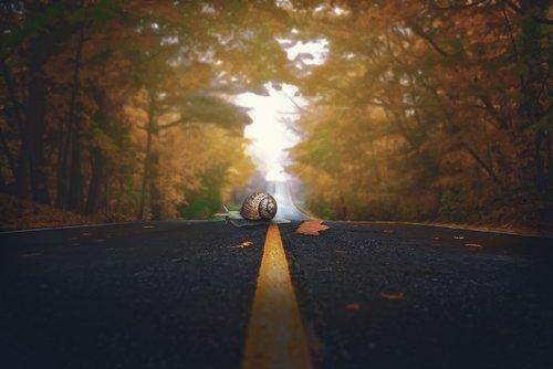 snail  autumn  road