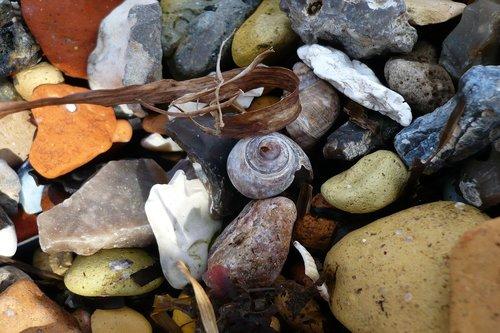 snail  beach  stones
