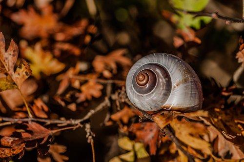snail  autumn  leaves