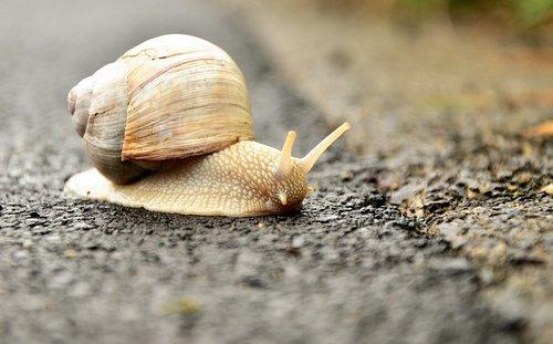 snail  white snail  shell