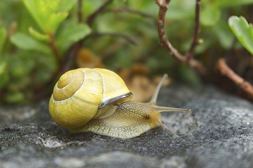 snail  cottage  shell