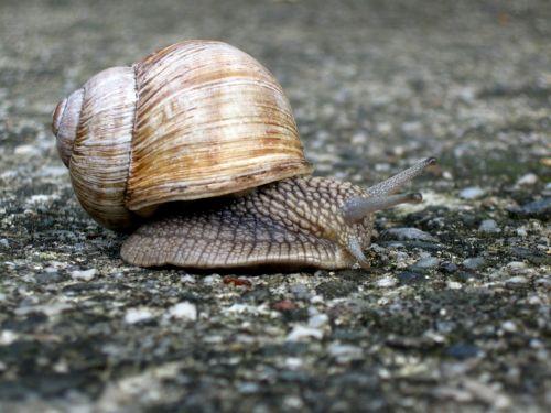 snail animal nature