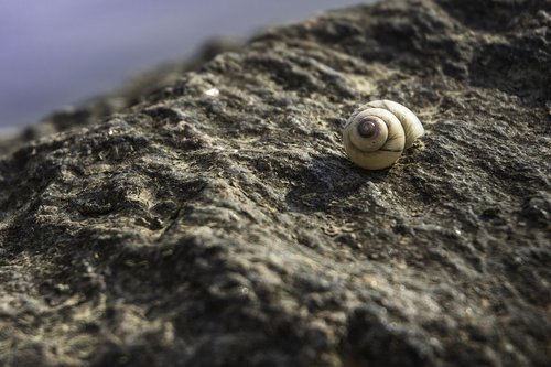 snail  rock  stone