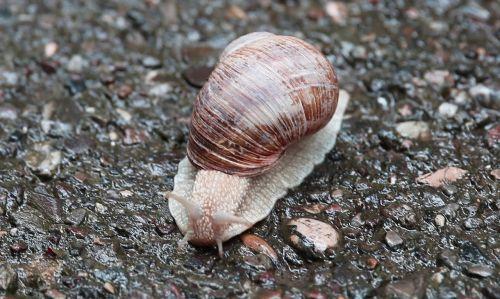 snail nature macro