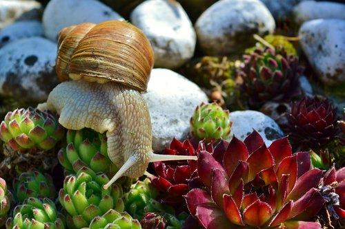 snail  mollusk  crawl