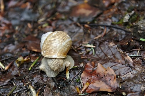snail  shell  leaves