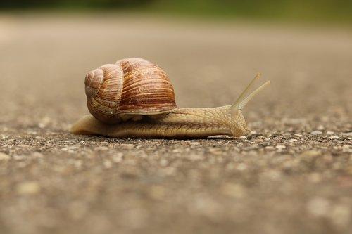 snail  nature  shell