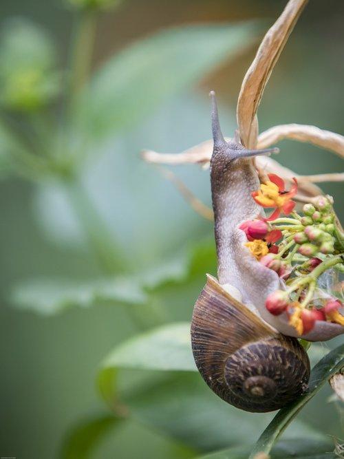 snail  plant  nature