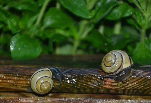 snail  tape worm  black
