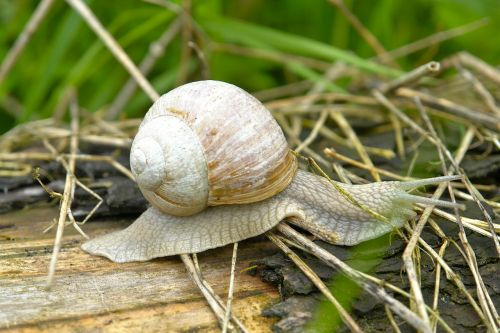 snail slowly nature