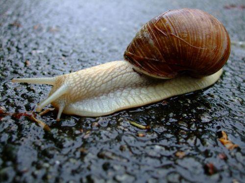 snail shell mucus