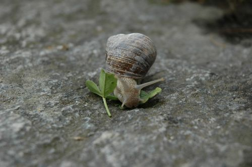snail animal rock