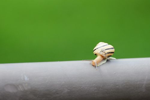snail nature slow