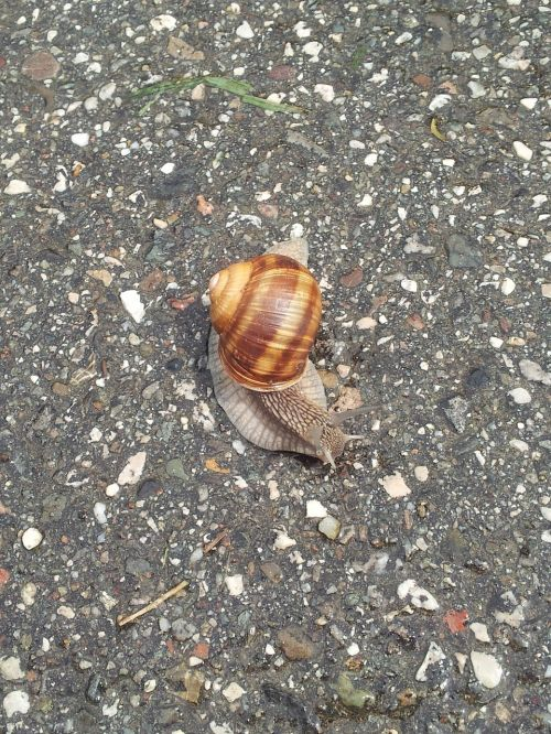 snail slow degrowth