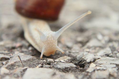 snail probe small