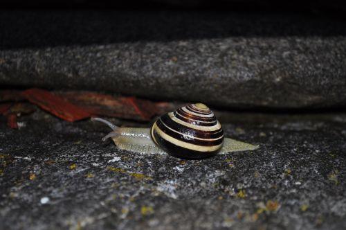 snail animal shell