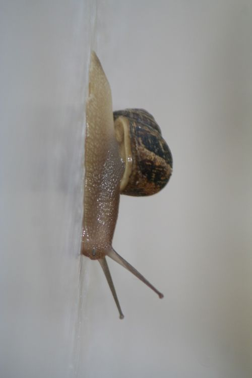 snail slug crawl