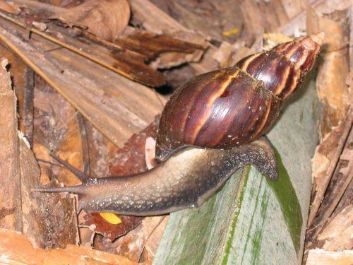snail shell crawl
