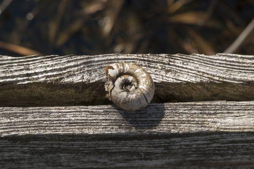 snail tree texture