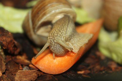 snail eat crawl
