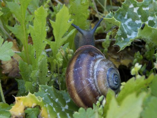 snail,nature,animal,shell,hermaphrodite,plants,free photos,free images,royalty free