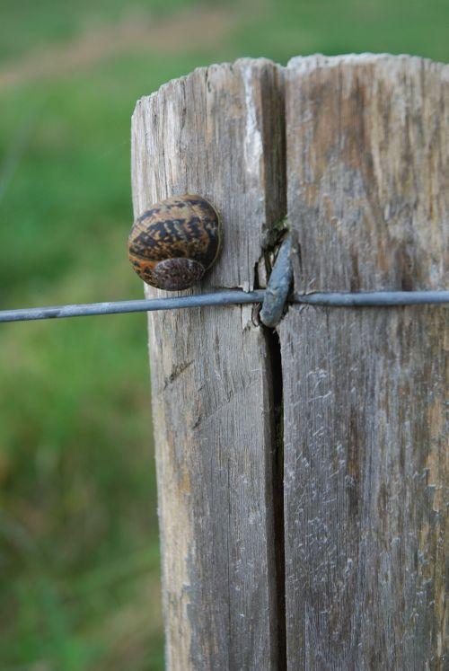 snail pre post