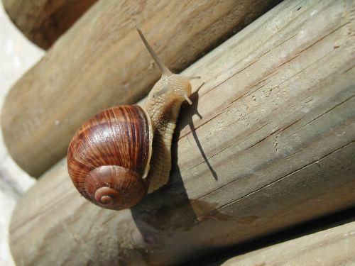 snail seashell nature