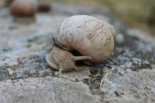 snail big nature