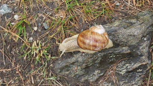 snail prado alps