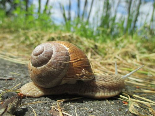 snail shell crawl