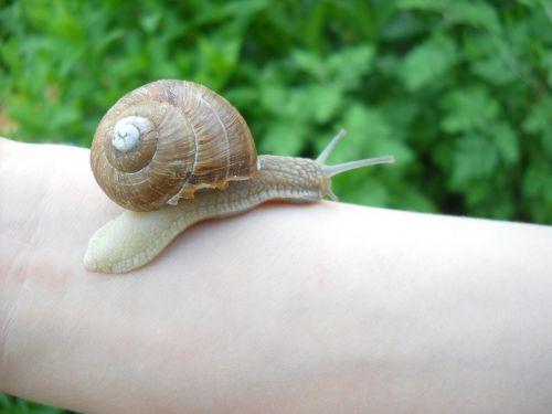 snail nature crawl