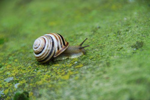 snail seashell molluscum