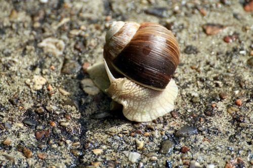 snail gastropoda molluscs