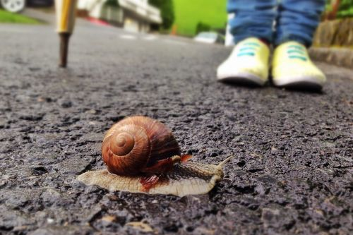 snail animal slowly