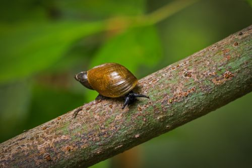 snail inch nature