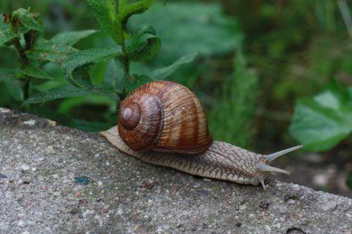 snail winniczek nature
