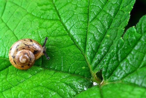 snail nature leaf