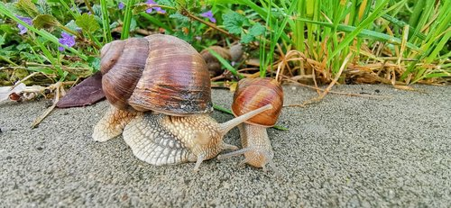 snail family  snails on the road  green grass with snails