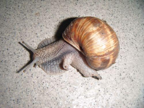 Snail On Gray Tile