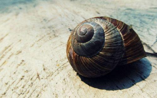 snail shell shell snail