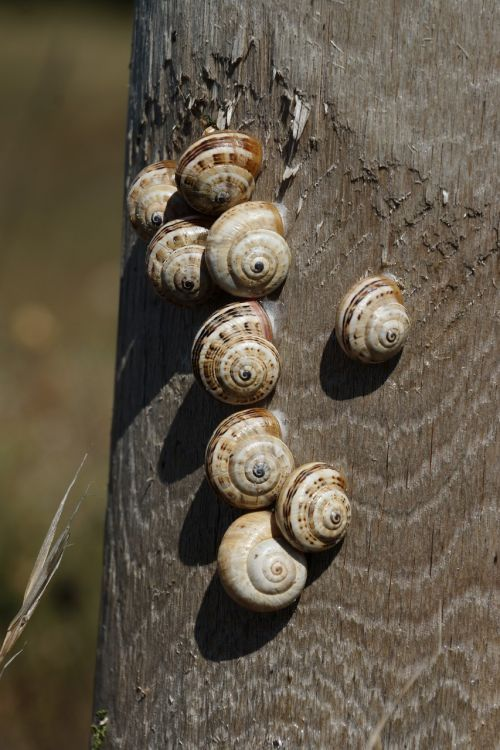 snails shell group