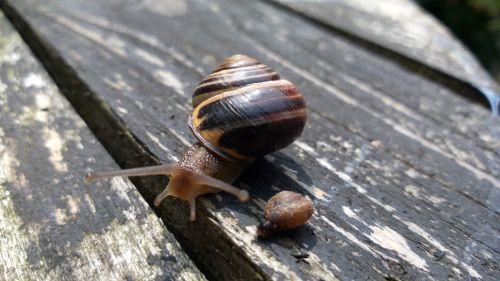 snails snail old