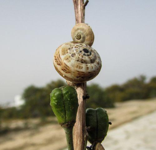 snails shells nature