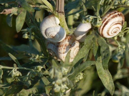 snails ukraine nautilus