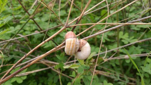 snails snail autumn