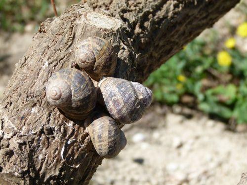 snails snail branch