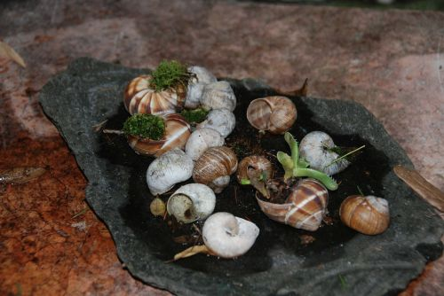 snails naturdeko shell